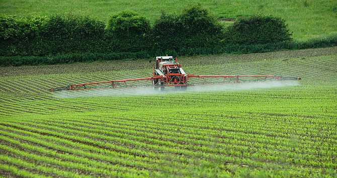 Agricultural company with 6700 hectares in Sumy region