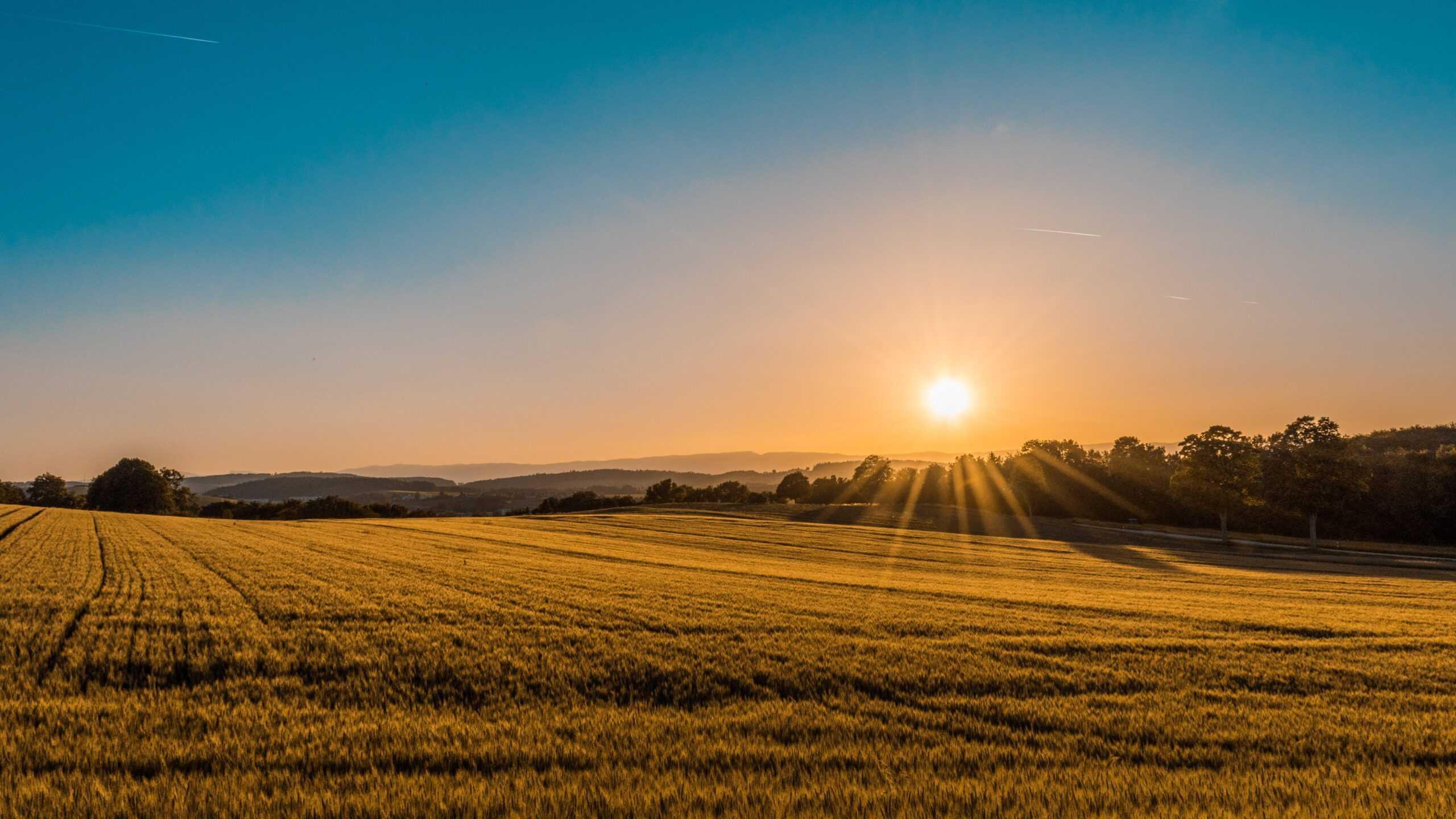 Ринок землі: скільки гектарів продали в Україні за два місяці