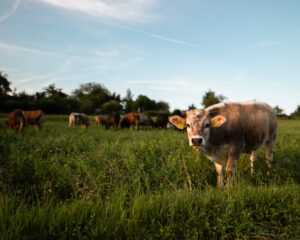 The United States can invest $ 1 billion in Ukrainian livestock by 2025